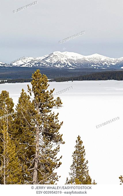 Winter, Hayden Valley in Yellowstone NP, WY