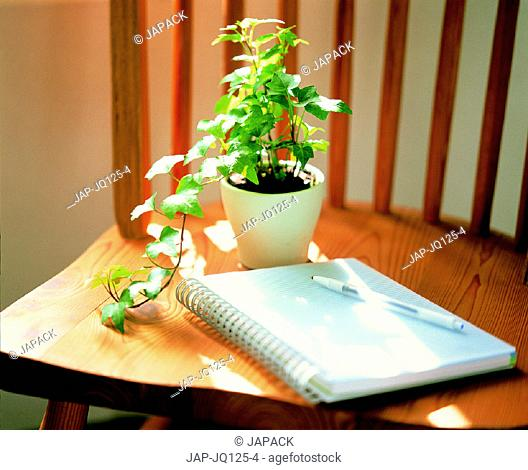 Plant and notebook on chair