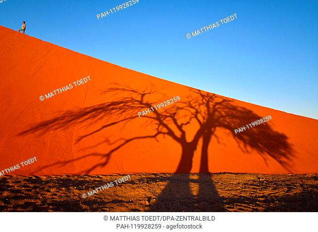 Shortly after sunrise, an acacia casts its shadow over a dune in the Sossusvlei, a tourist takes a rest on his ascent to the Duene, taken on 01.03
