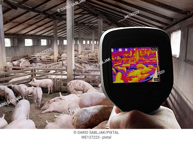 Swine Flu Detection with Thermal Camera