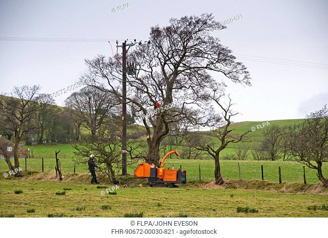 Electricity North West workers removing branches from trees to clear electricity powerlines, Whitewell, Lancashire, England, december