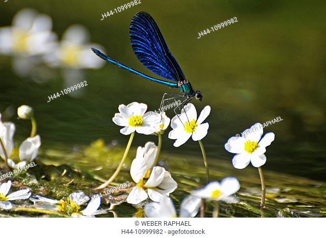 beautiful demoiselle on flower