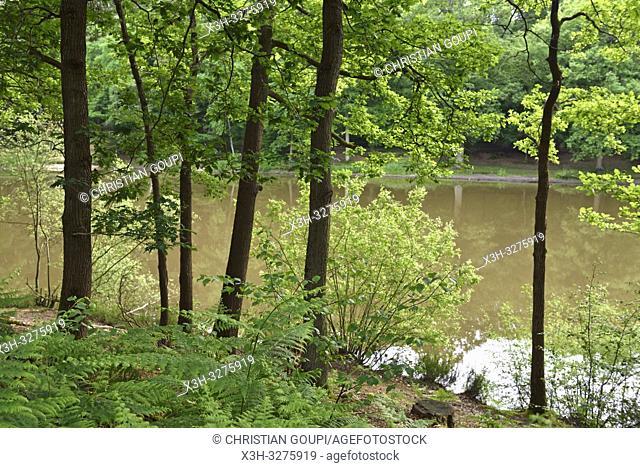 Etang du Coupe-Gorge (Cutthroat Pond) in the Forest of Rambouillet, Haute Vallee de Chevreuse Regional Natural Park, Yvelines department, Ile-de-France region