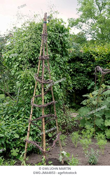HAZEL AND BIRCH STICKS USED AS SUPPORTS IN THE BORDER