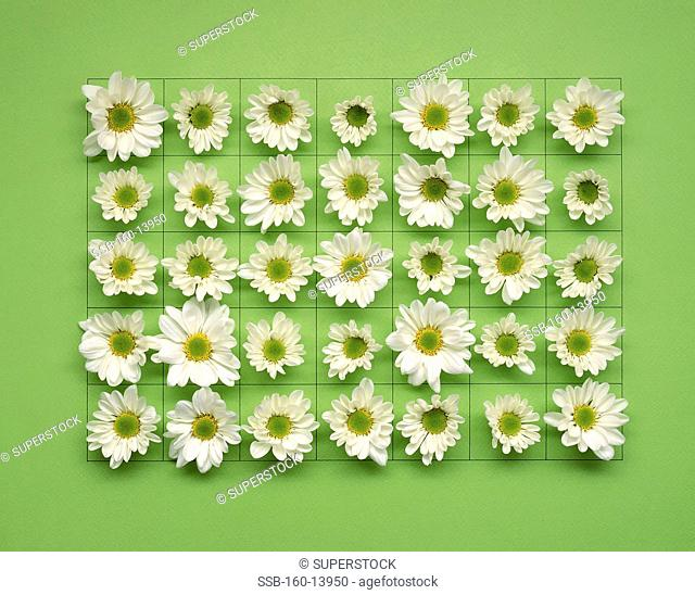 Square and flower