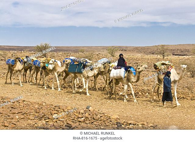 Camel caravan riding through the stone desert near Atar, Mauritania, Africa