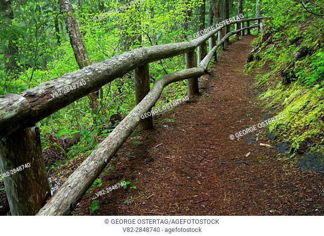 Salt Creek Falls Trail, Willamette National Forest, Oregon