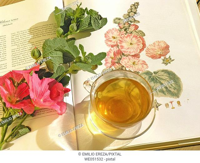 Marsh Mallow tea (Althaea officinalis)