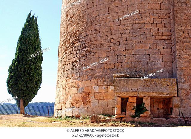 Cypress tree, church of Santa Maria, Siurana, Tarragona, Catalonia, Spain