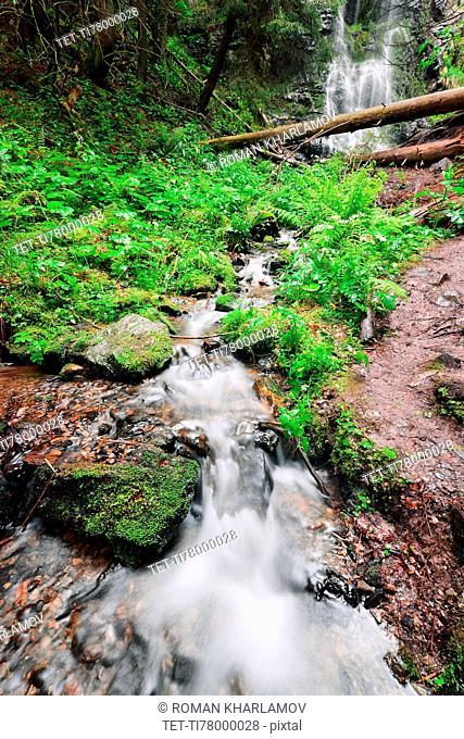 Ukraine, Zakarpattia, Rakhiv district, Carpathians, Stream with waterfall in forest