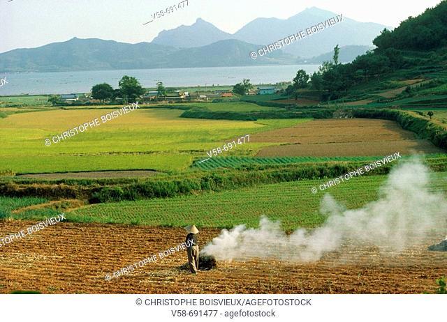 Farmer burning rice straw. Busan region, South Korea