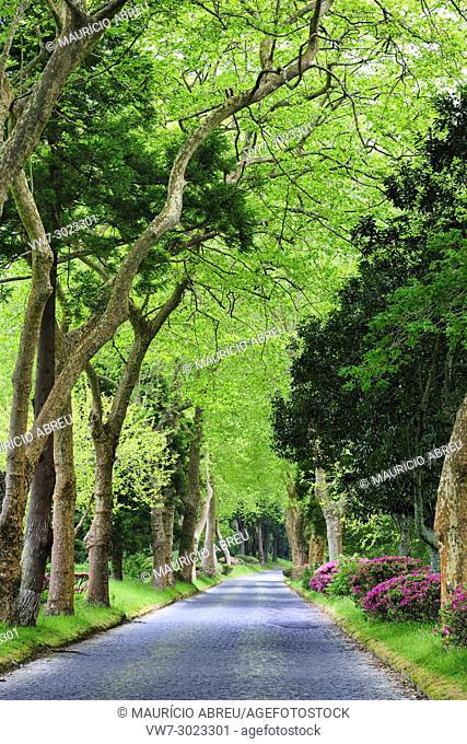Furnas. São Miguel, Azores islands. Portugal