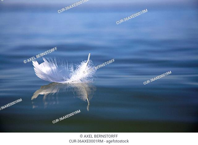 Feather floating on still lake