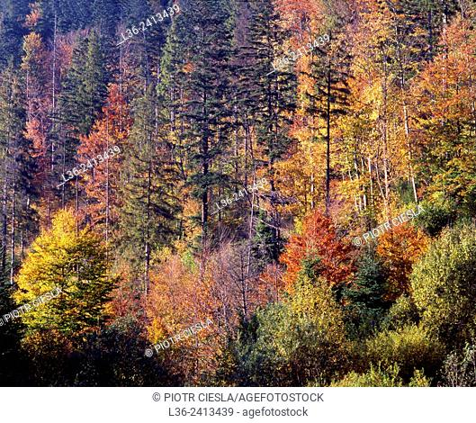 Bieszczady National Park. Forest in autumn Poland