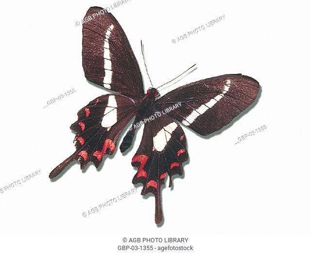 Photo illustrated an animal, butterfly, evolution, transformation, wings, nature