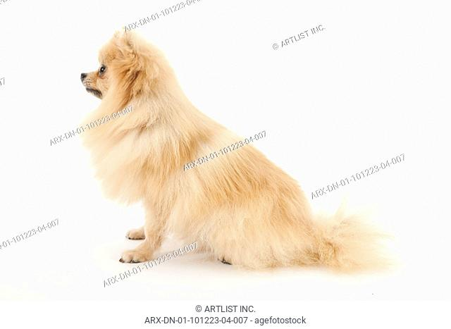 A sitting dog looking a side