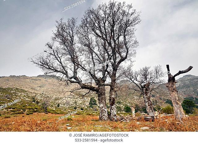 Hornillo pass in the Sierra de Gredos. Avila. Castilla Leon. Spain. Europe