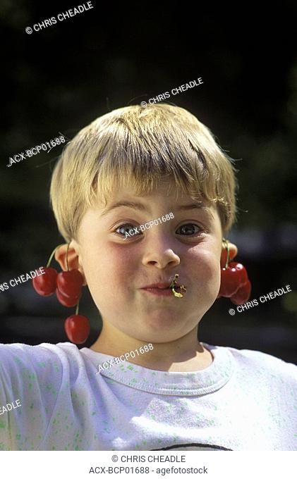 Young boy hangs ripe cherries from ears with mouthful, British Columbia, Canada