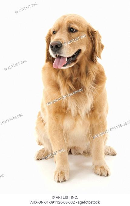 A sitting dog