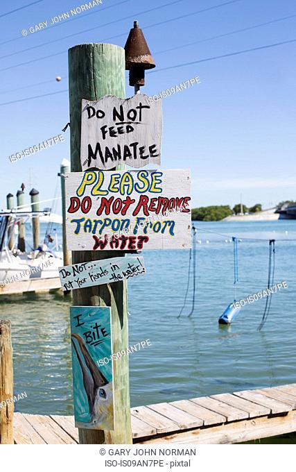 Robbie's Marina where the public can hand feed the giant Tarpon fish, Islamorada, Florida Keys, USA
