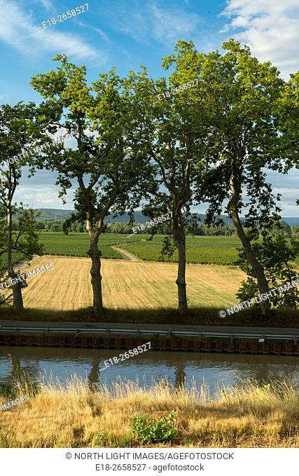 EU, France, Ventenac. Row of plane trees (platanus) beside the Canal du Midi with farm fields in the distance