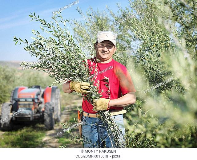 Man holding olive tree branches