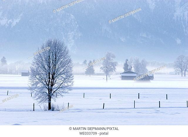 Winter morning. Grossweil, Bavaria, Germany