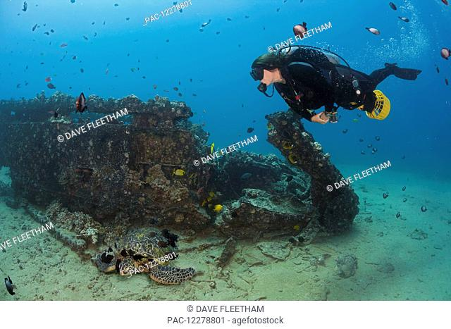 A diver on an underwater scooter and a green sea turtle (Chelonia mydas) at the Landing Craft wreck of Makena; Maui, Hawaii, United States of America