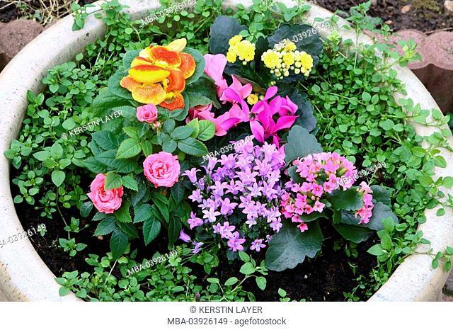 planting pot, flowers