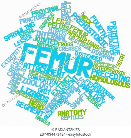 Abstract word cloud for Femur with related tags and terms
