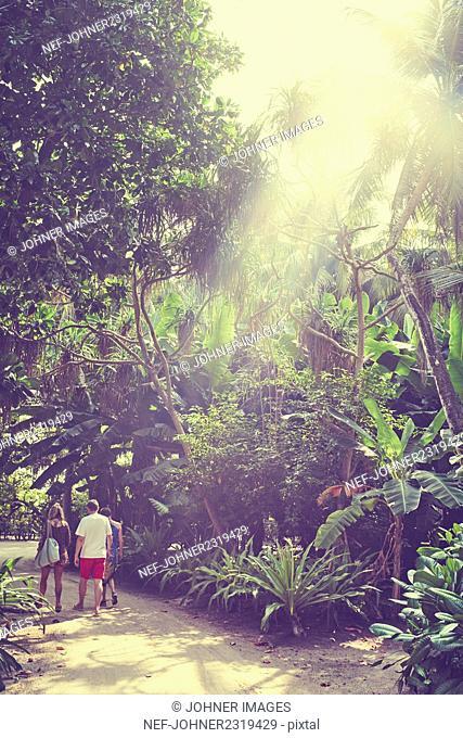 Family walking under palms