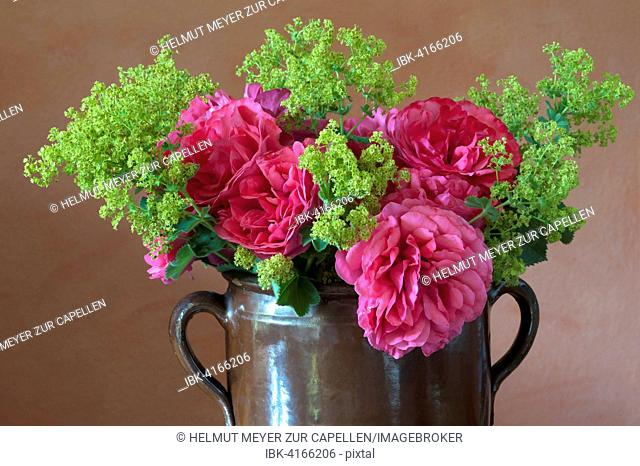 Bouquet in clay jug on table, Cariona rose (Rosa sp.) and lady's mantle (Alchemilla sp.)