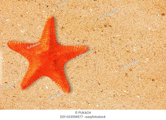 Res starfish on the yellow sand background