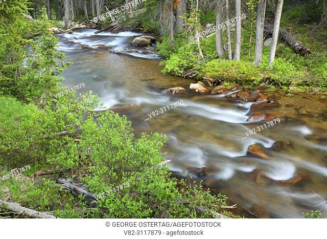 Fisher Creek along Lady of the Lake Trail, Gallatin National Forest, Montana