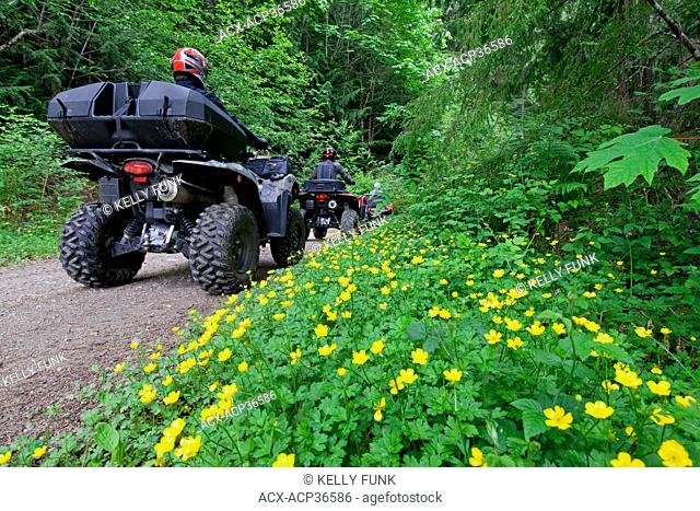 A group of adult men ATV quad riders take to the trails of Powell river on the upper Sunshine coast area of the Vancouver coast and mountain range