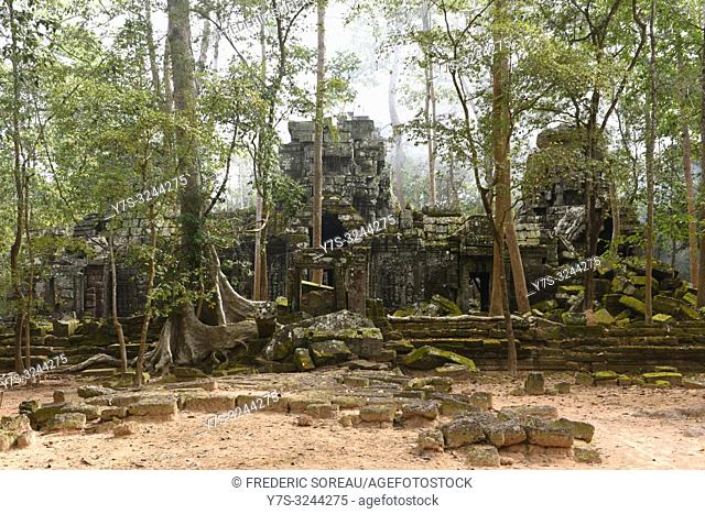 Ta Prohm temple, Angkor, Unesco, Siem Reap, Cambodia, South east Asia