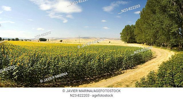 Almajano. Soria province, Castilla-Leon, Spain