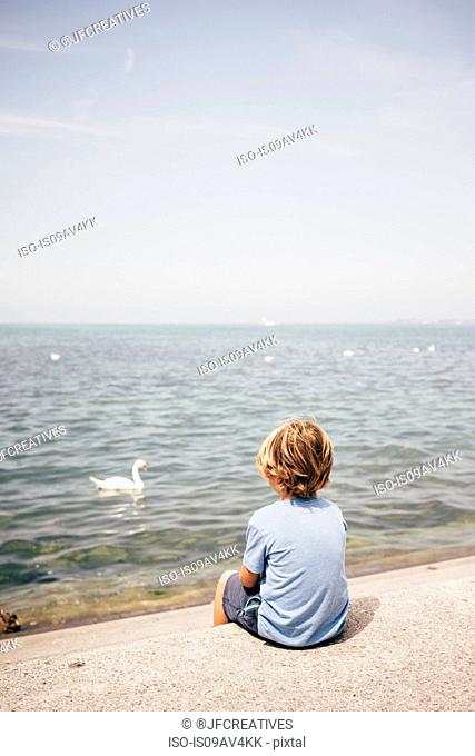 Rear view of boy sitting looking at swan on water, Bregenz, Vorarlberg, Austria