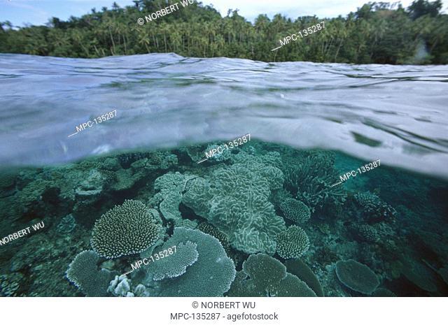 Barrier reef, Hard Corals within inner lagoon, Fiji