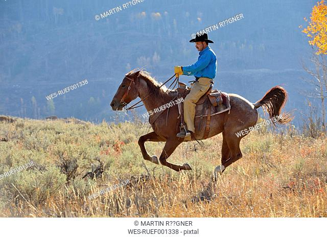 USA, Wyoming, Big Horn Mountains, riding cowboy in autumn