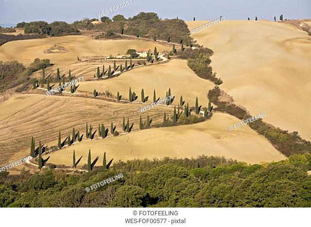Italy, Tuscany, Farm house and cypress trees