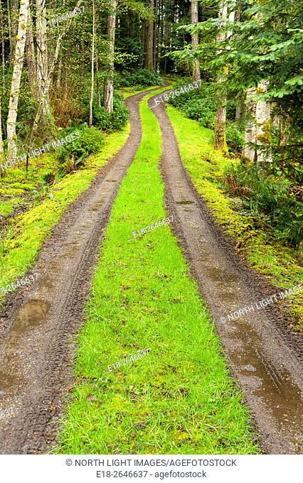 Canada, BC, Gabriola Island. Narrow, dirt road in the forest