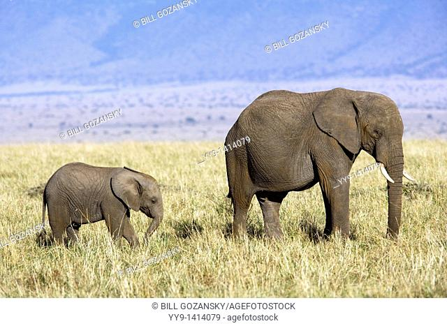 African Elephant with young - Masai Mara National Reserve, Kenya