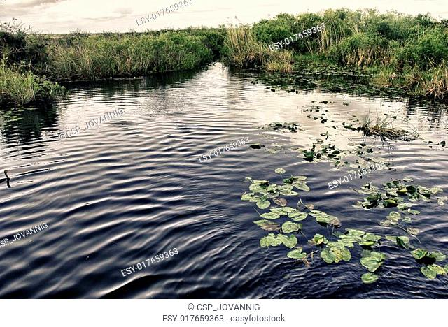 Vegetation and Fauna in the Everglades