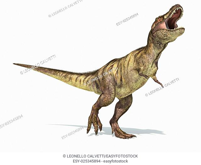 Tyrannosaurus Rex dinosaur, full body photorealistic representation. Dynamic view. On white background and drop shadow. Clipping path included