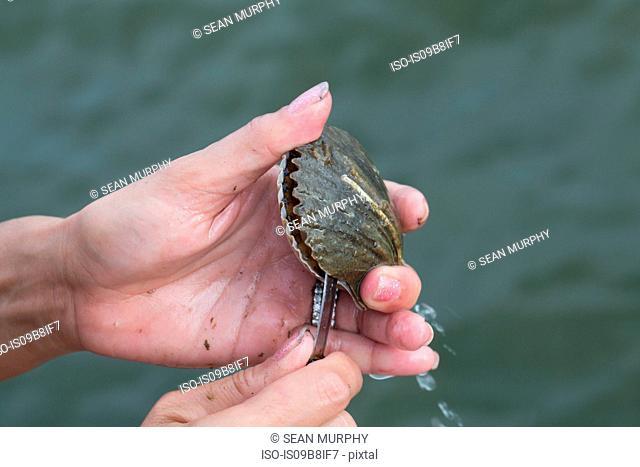 Woman opening shell, close-up