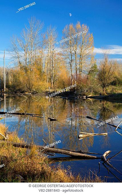 Pond, St Louis Ponds Wildlife Area, Marion County, Oregon