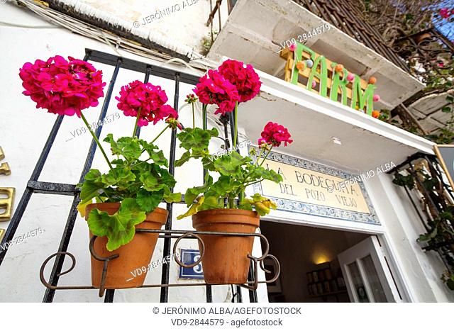 Pot with flowers in the bar restaurant La Bodeguita del Pozo Viejo, historic center, Marbella. Malaga province Costa del Sol