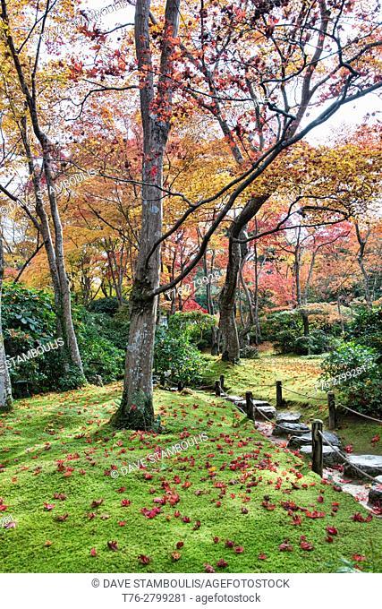 Fallen autumn leaves in the Okochi Sanso Villa garden Kyoto, Japan