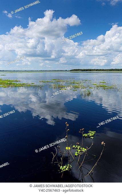White summer clouds reflecting in Upper Myakka Lake in Myakka River State Park in Sarasota Florida